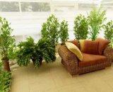 Сад в квартире: принципы обустройства цветочного уголка